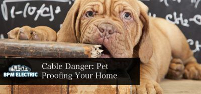pet-proofing-your-home