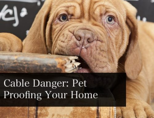 Cable Danger: How To Pet Proof Cables At Home